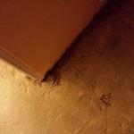 Living Room Floor 2